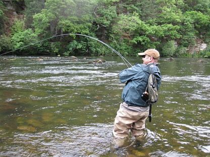 Playing a trout on a fly fishing line